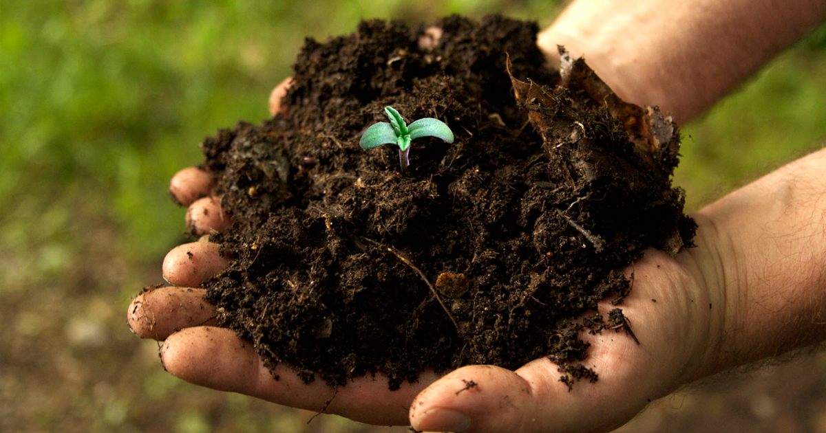 What Makes Good Soil Mix for Growing Cannabis