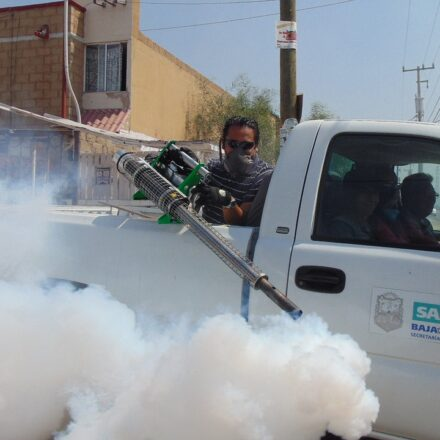 Why look for Environment-Friendly Pest Control Services